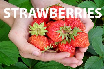 strawberriesweb